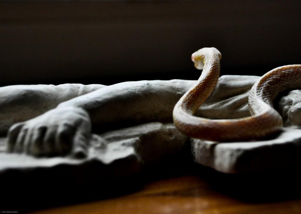 Malice - Snake